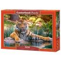 Puzzle 500 el. Sumatran Tiger - Tygrys sumatrzański
