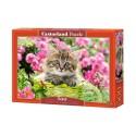 Puzzle 500 el. Kitten in Flower Garden - Kotek na tle kwiatów